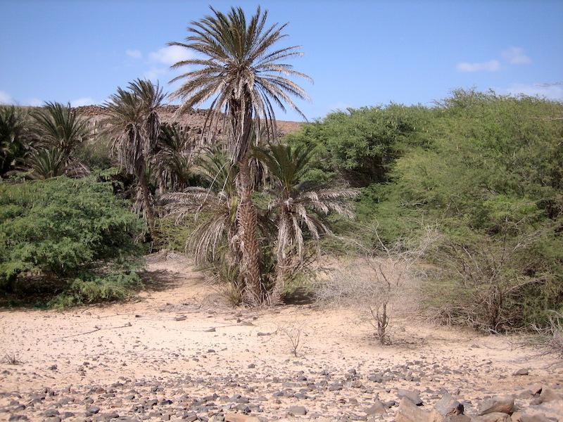 Deserto Boavista