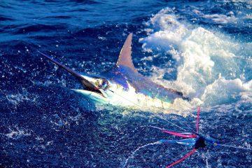 Marlin a Capoverde