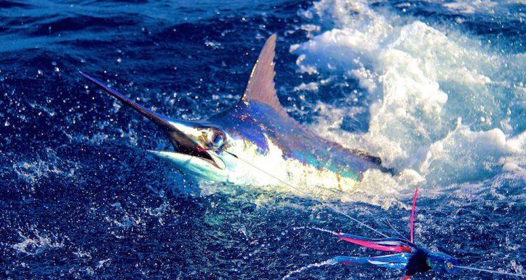 pesca Boavista Capo Verde
