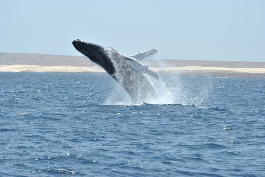 Escursione Balene Boavista