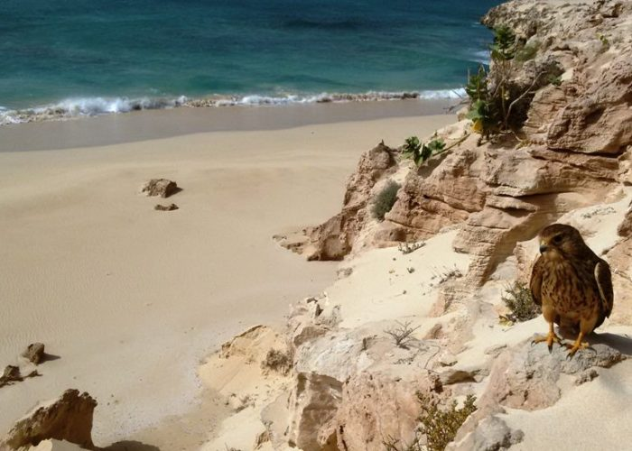 escursione Cau Tour