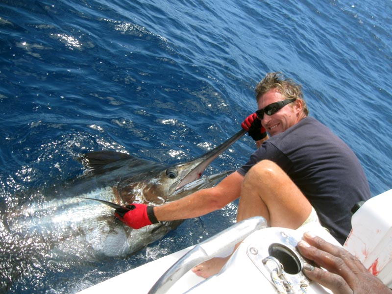pesca al Marlin boavista capoverde