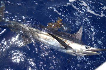 Pacchetto pesca Cabo verde Boavista