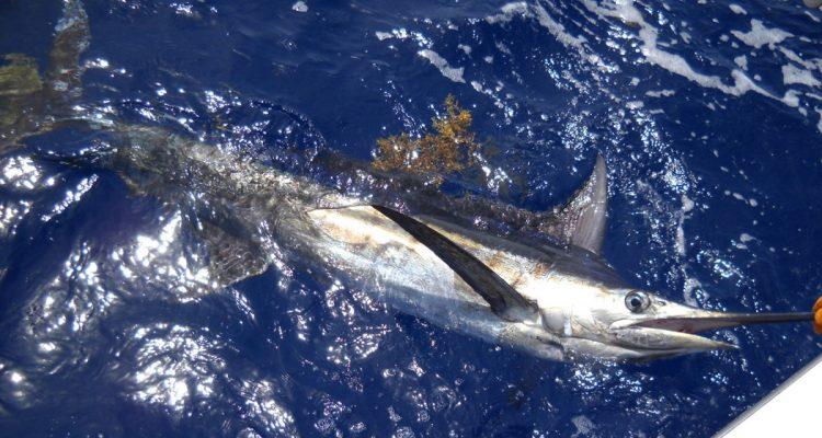 charter pesca capo verde boa vista